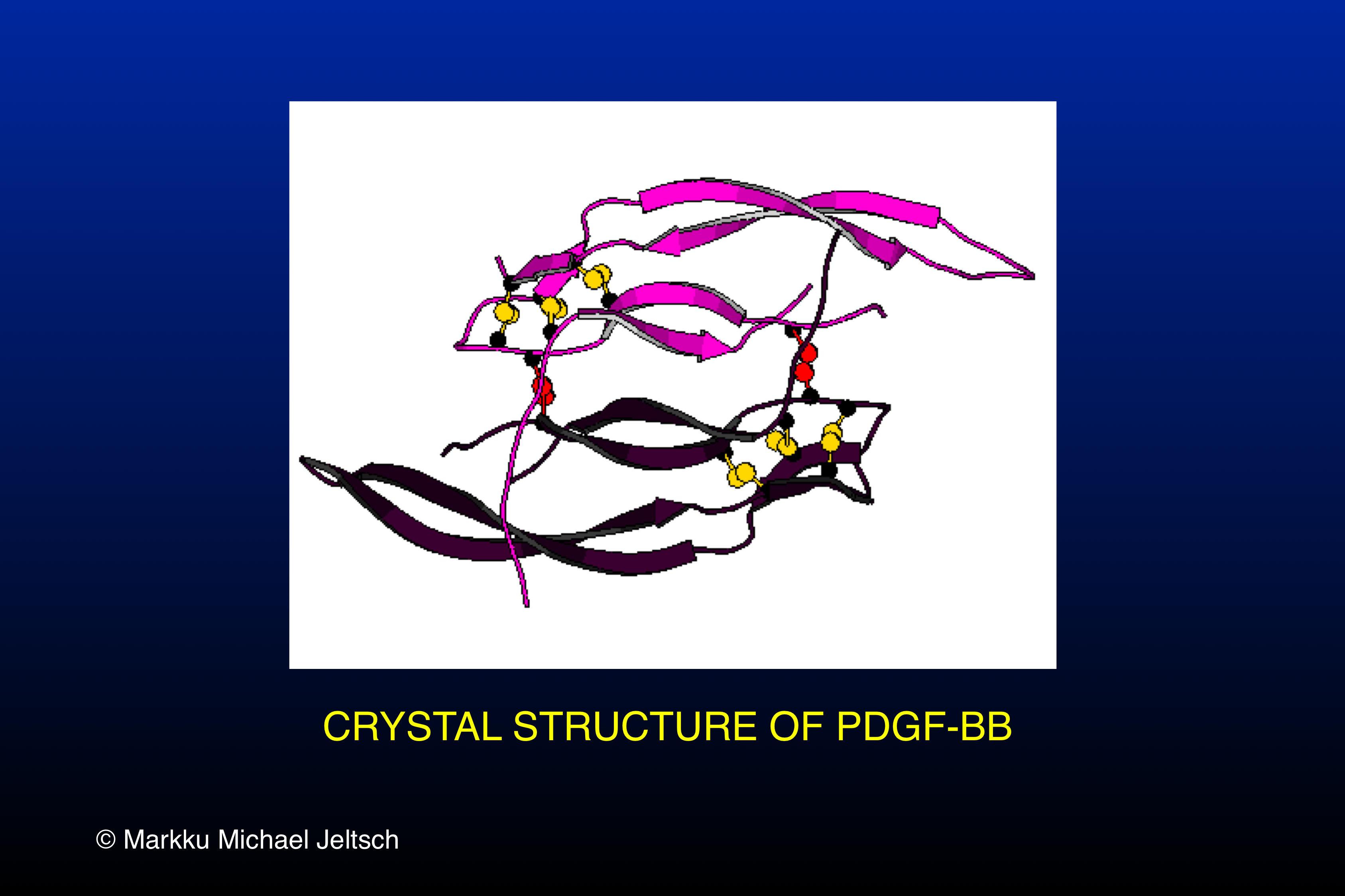 crystal structure of PDGF-BB