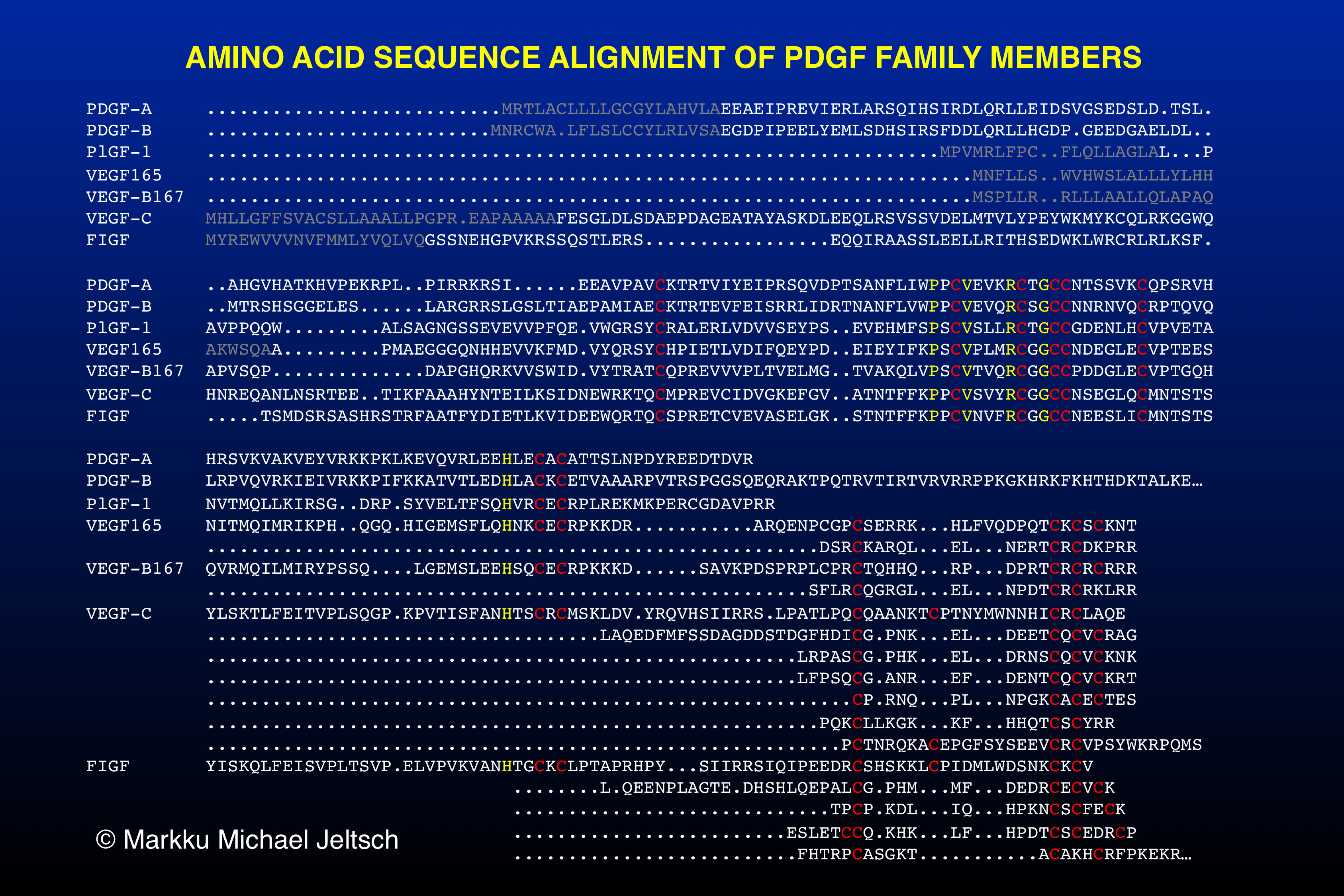 amino acid sequence alignment of PDGF family members