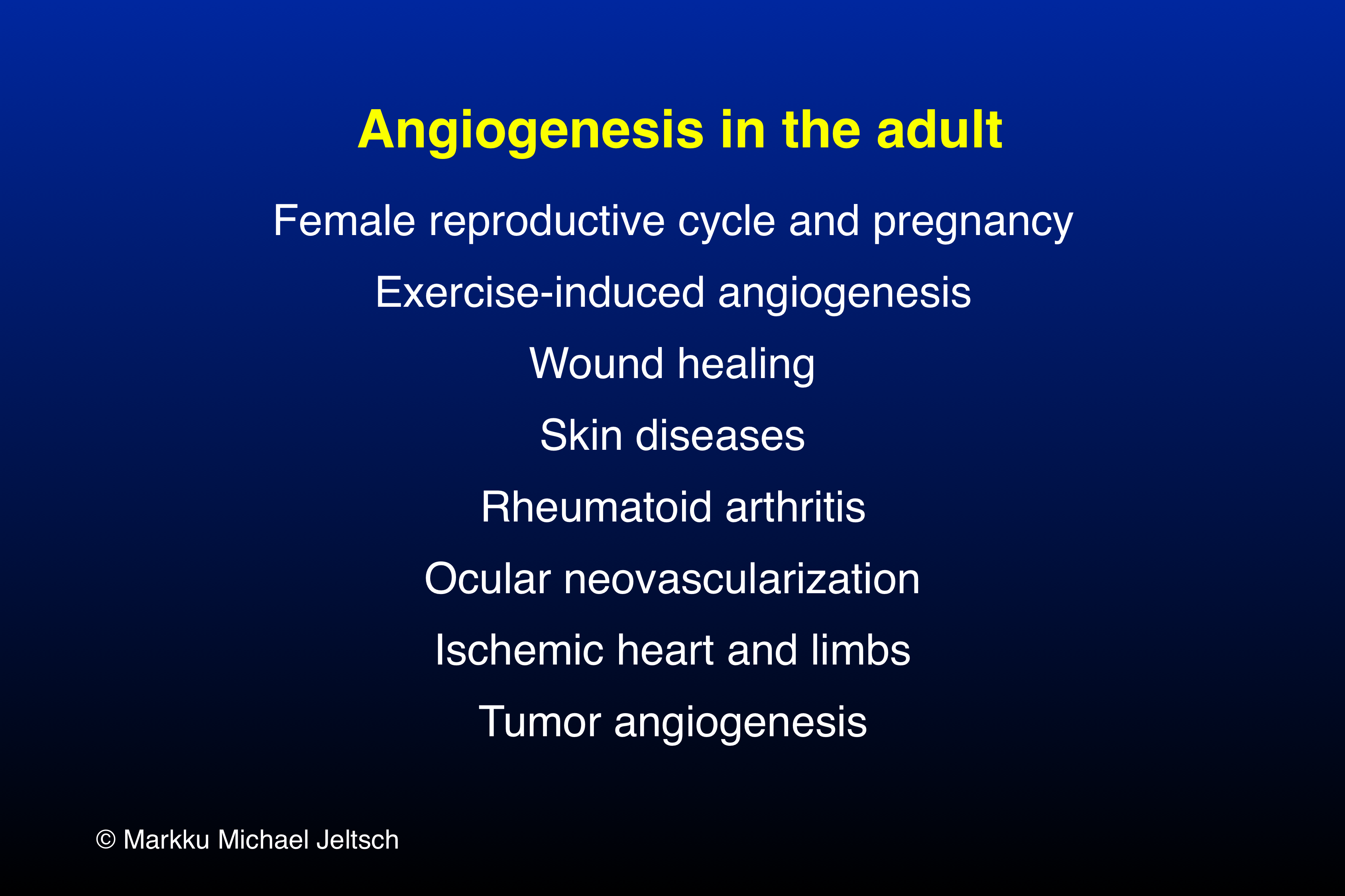 angiogenesis in the adult organism