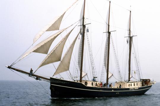 Cruise on the IJsselmeer