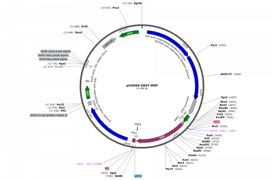 Plasmid map