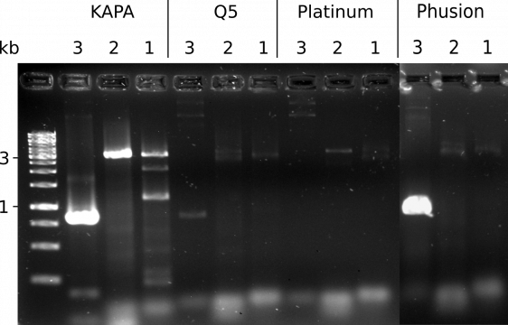 Comparison of PCR polymerases