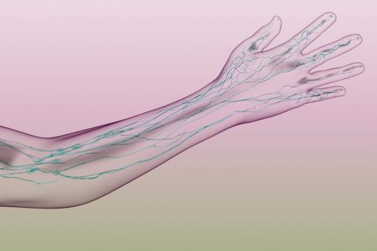 Lymphatics in the arm