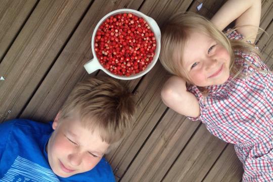 Wild stawberries