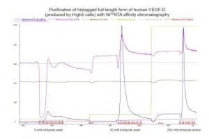 Chromatogram of VEGF-D protein purification